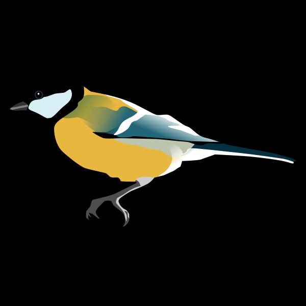 Great Tit bird drawing
