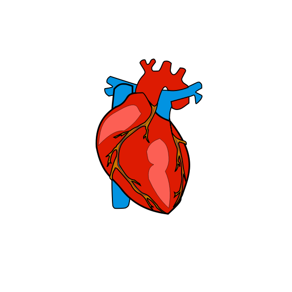 Red human heart | Free SVG