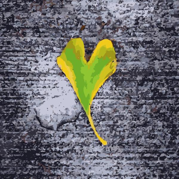 Heart shaped leaf 2015051202
