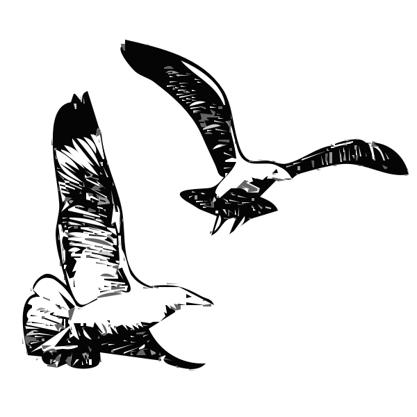 Herring Gulls flying up vector graphics