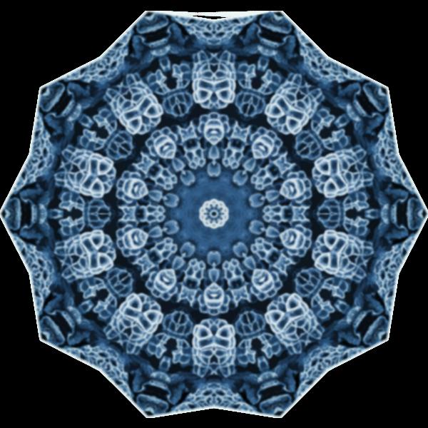 Hexacorolla15
