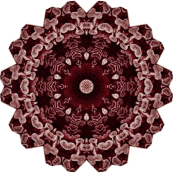 Hexacorolla18