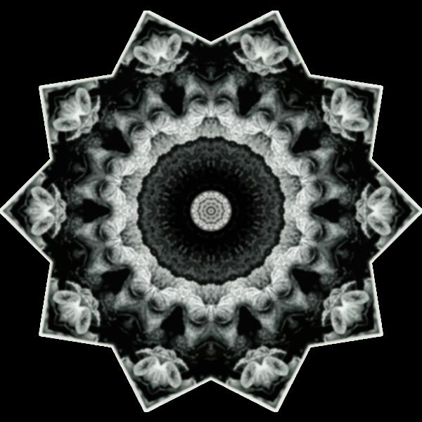 Hexacorolla19