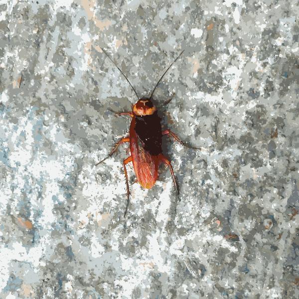 Hong Kong Bug 2015033046