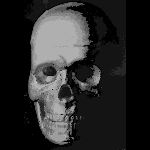 Skull 8c