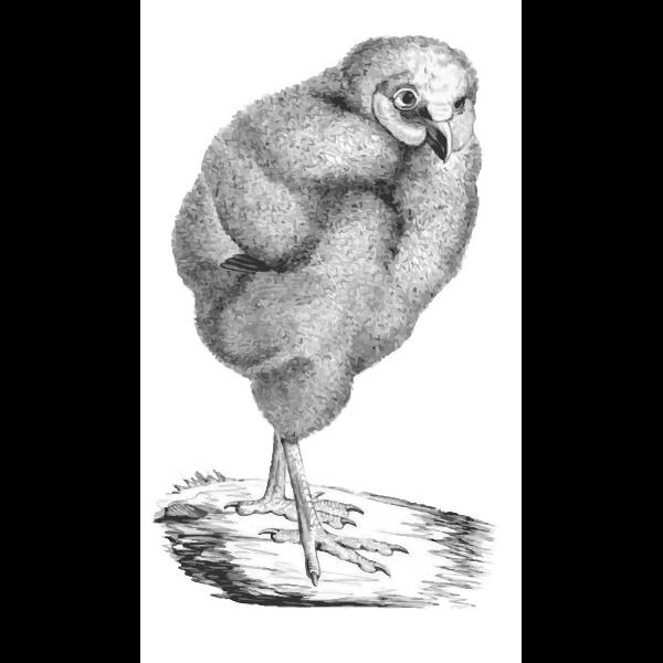 Victorian bird illustration