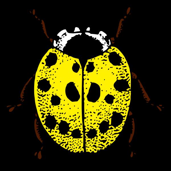 LadybirdColour2