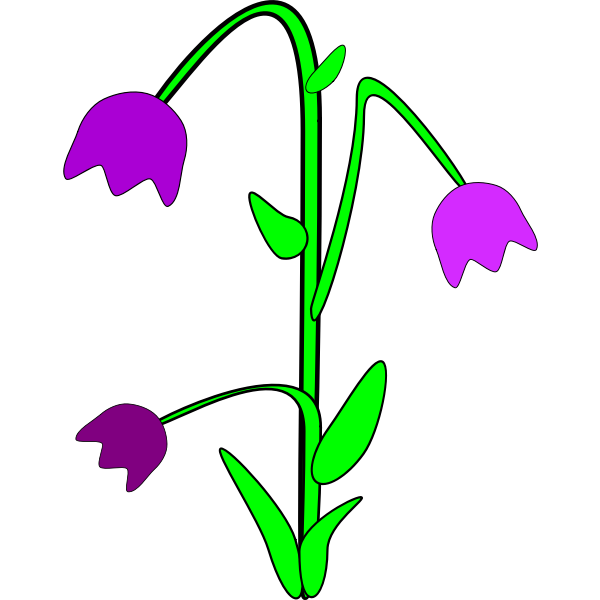 Bellflower vector graphics