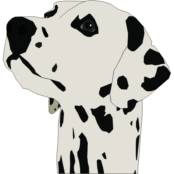 Dalmatian dog portrait vector image