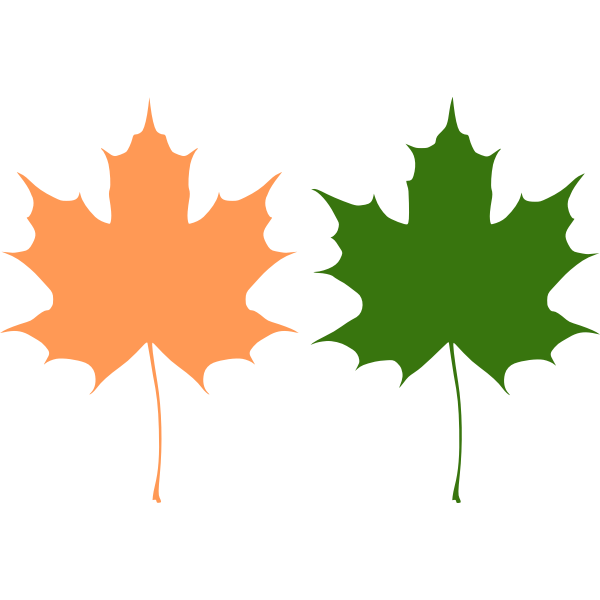 Orange and green maple leaves vector drawing