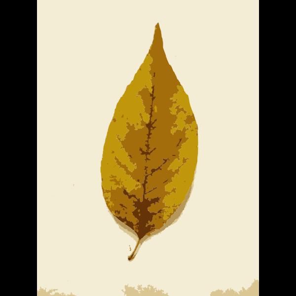 Missouri Fall Tree Leaves