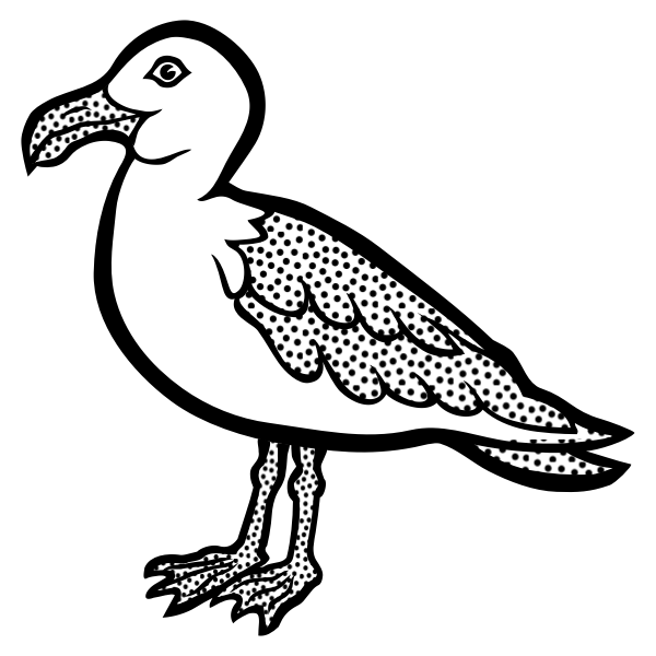 Drawing of spotty gull