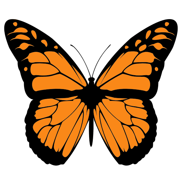 Vector image of orange butterfly with wide spread wings