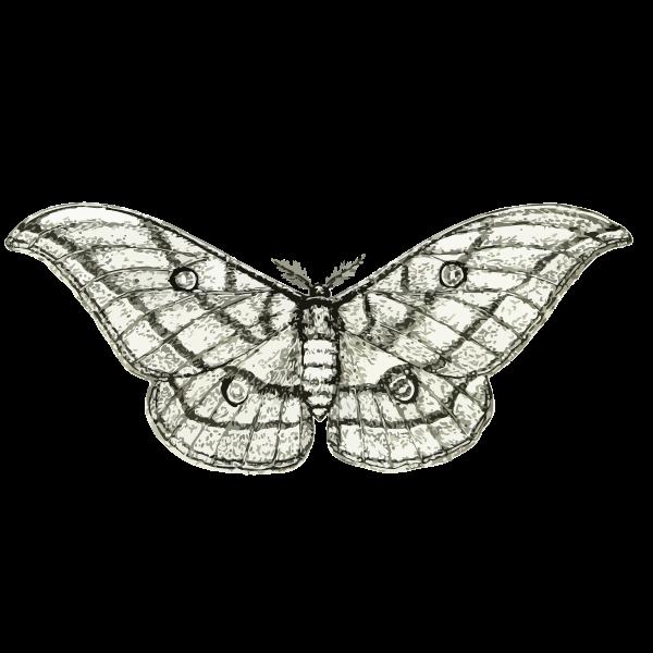 Moth vector sketch