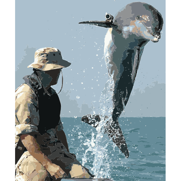 NMMP dolphin with locator 2016121807