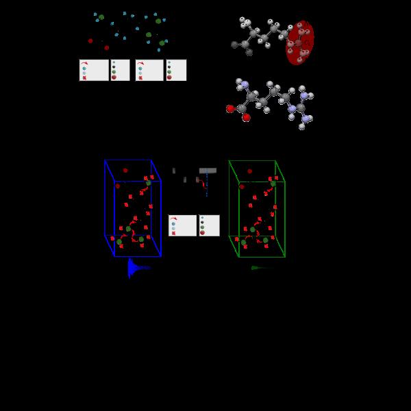 NMR arginine schemes
