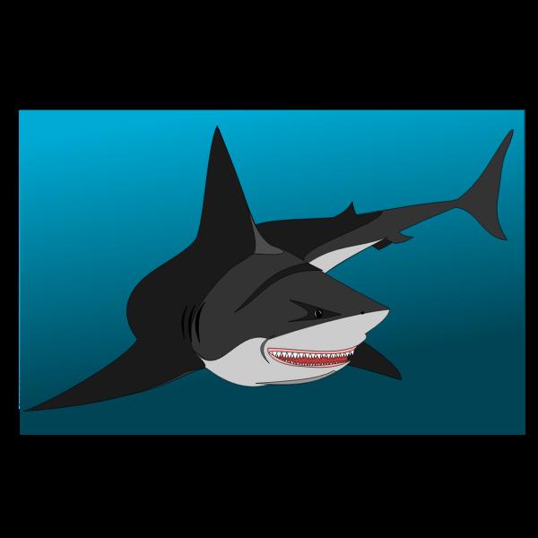 Non Friendly shark