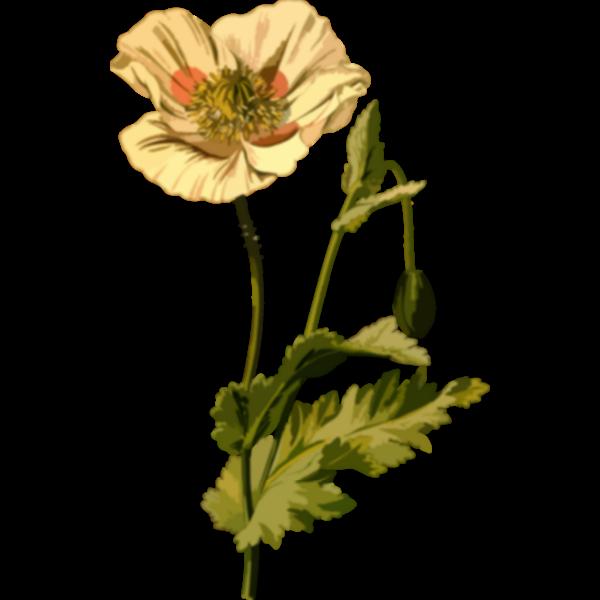 OpiumPoppyLores