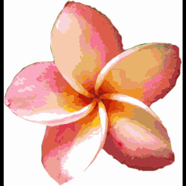 Orange Flower 2015052048