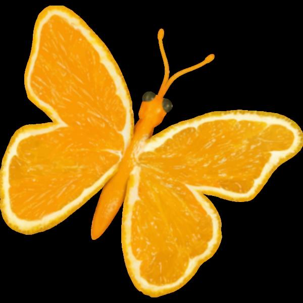 Citrus butterfly