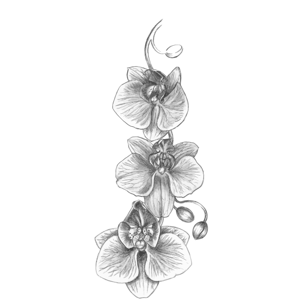 Orchid Sketch Free Svg