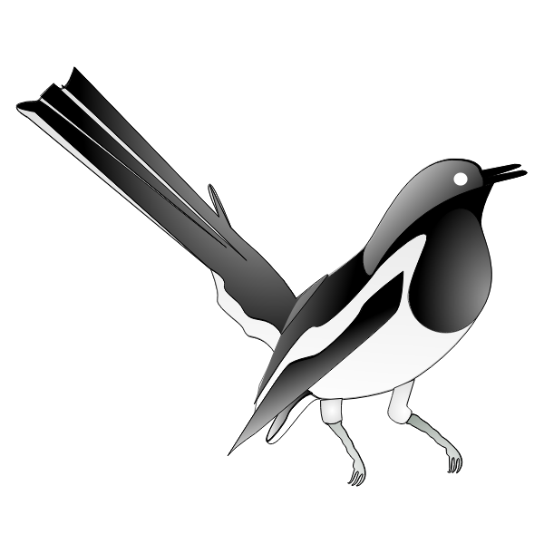 Drawing of oriental magpie-robin