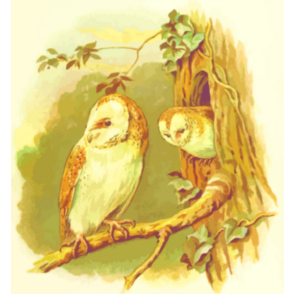 Two owls image