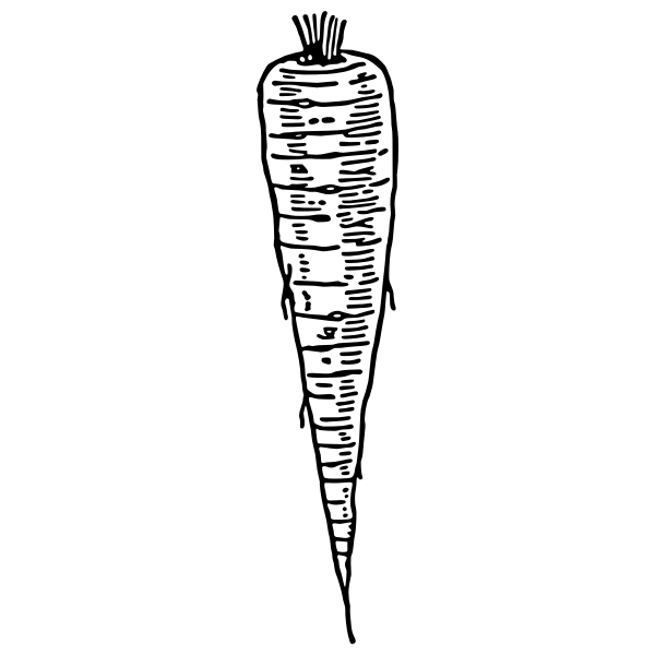 Parsnip vector clip art