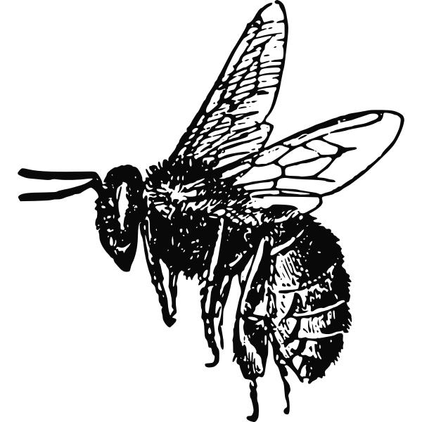 Flaying bee vector image