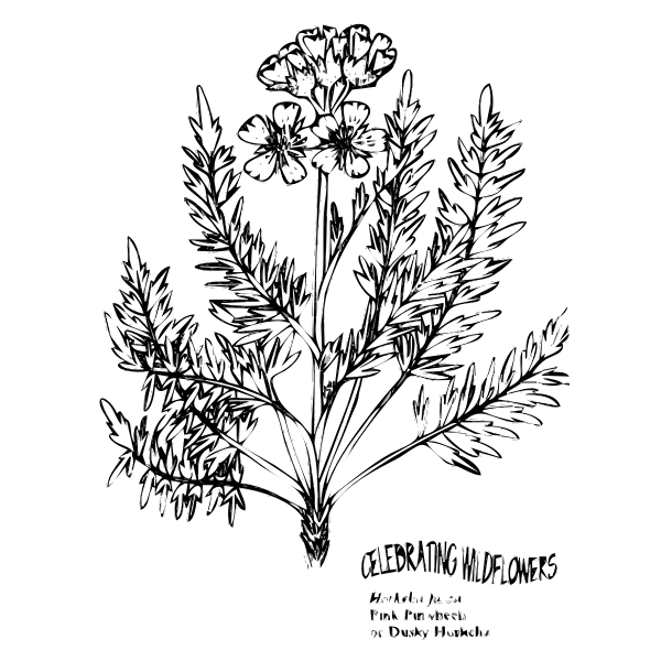 Pinwheel flower vector image