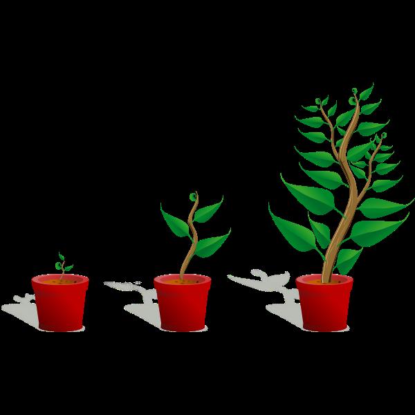Green plants in pots vector image