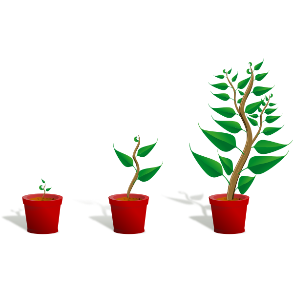 Green plants in pots vector image