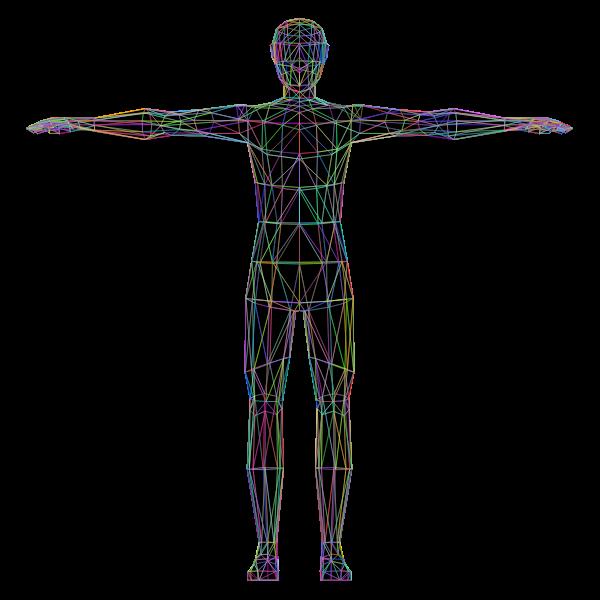 Colorful human anatomy