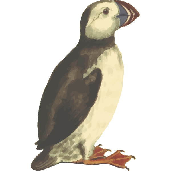 PuffinIsolated
