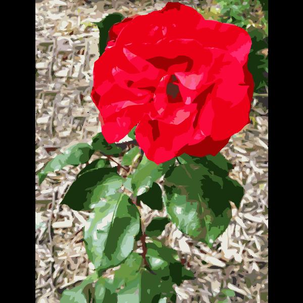 Red Flower 2015053159