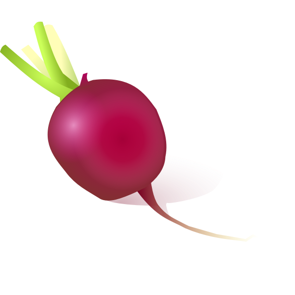 Vector image of radish