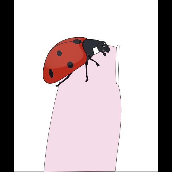Ladybug on fingertip