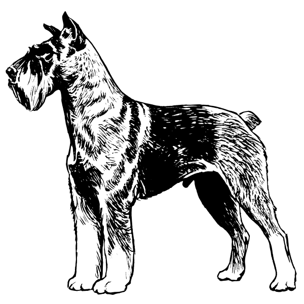 Schnauzer image