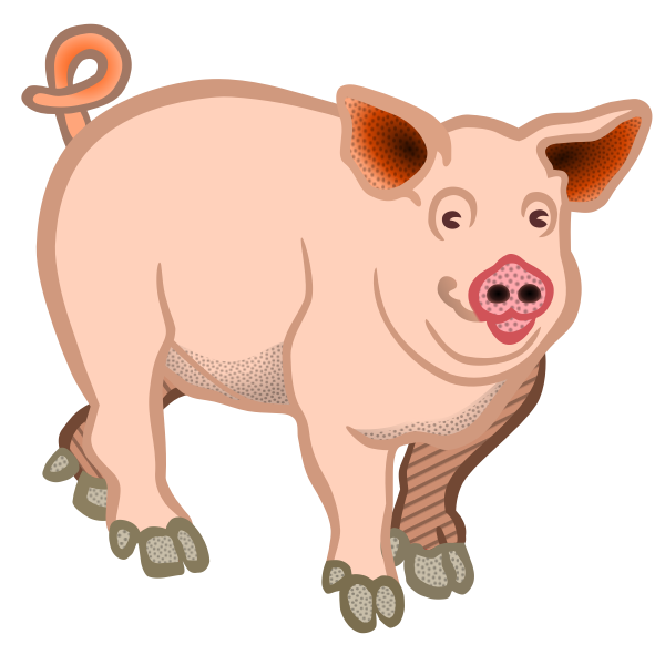Pig domestic animal