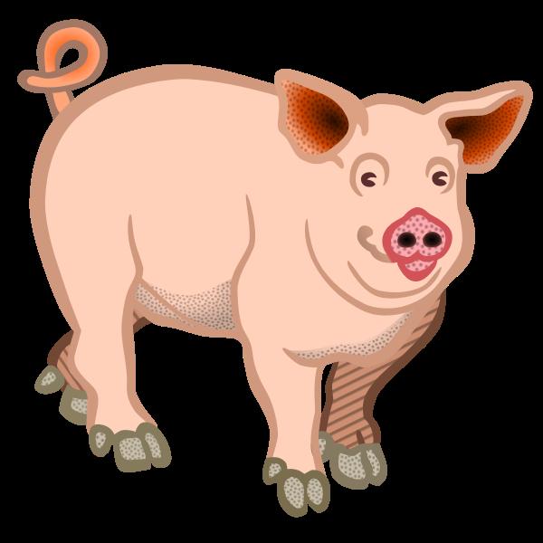 Pig domestic animal