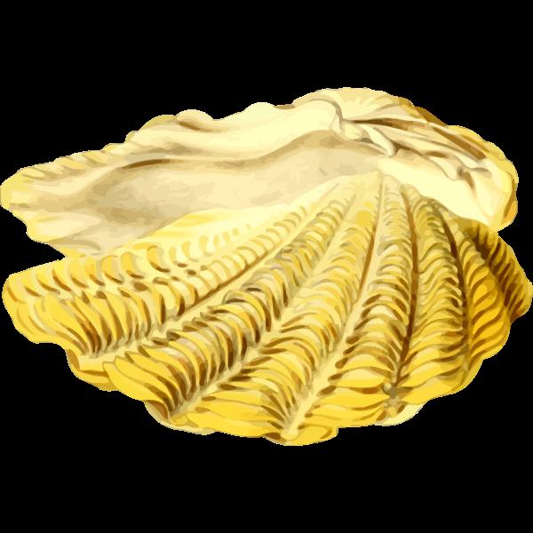 SeaShell22