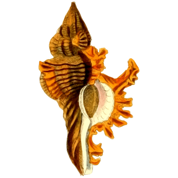 Yellow sea shell