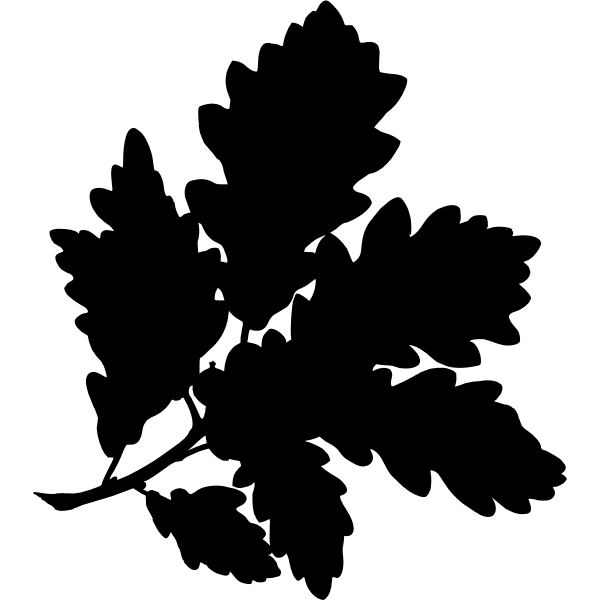 SessileOakSilhouette