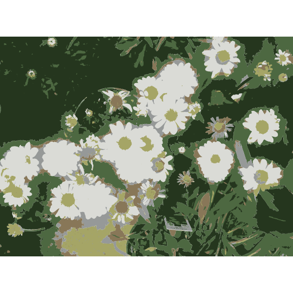 So many Missouri aiflowers flowers 1