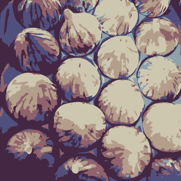 Super big Figs