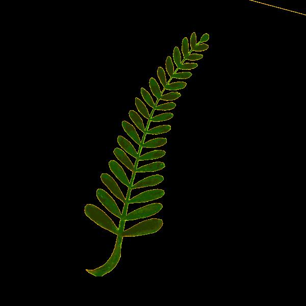 Twiggy plant