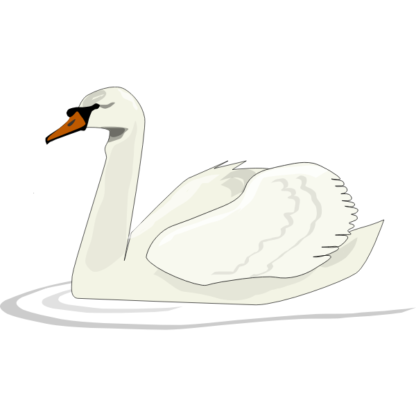 Swan swimming vector