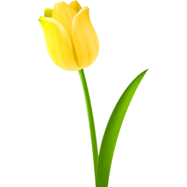 Tulip Colour yellow