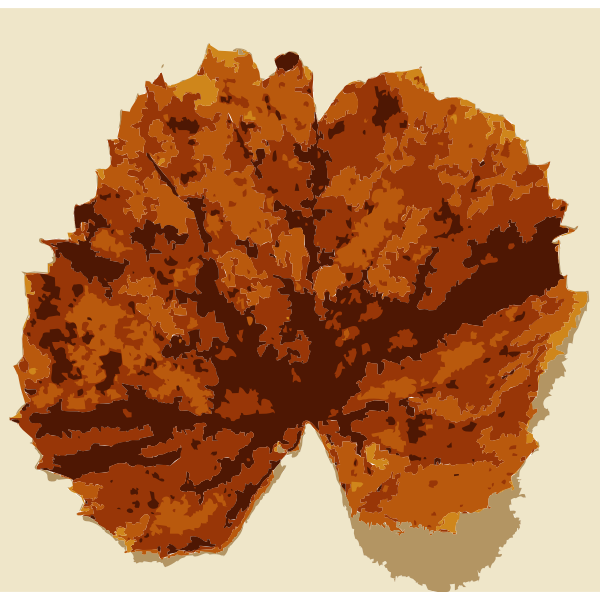 Various Missouri tree leaves 2