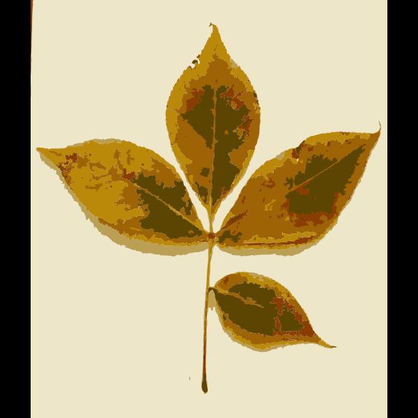Various Missouri tree leaves